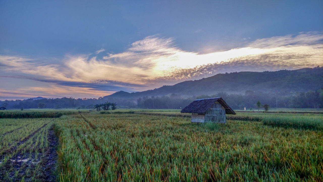Agriculture Architecture Beauty In Nature Cloud - Sky EyeEm Best Shots EyeEmNewHere Farm Field Fog Full Length Growth Idyllic Landscape Morning Mountain Nature No People Outdoors Paddy Field Rural Scene Scenics Sky Tranquil Scene