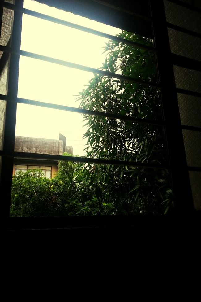 the good thing about rainy days is the trees, they are like having a drinking session. GreenME