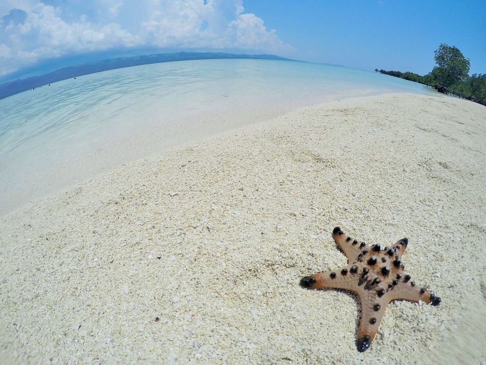 starfish by the sea Beach Photography Beauty In Nature Horizon Over Water Outdoor Photography Outdoors Photograpghy  Sand & Sea Sea And Sky Seascape Seascape Photography Starfish  Starfish At Beach Starfishes