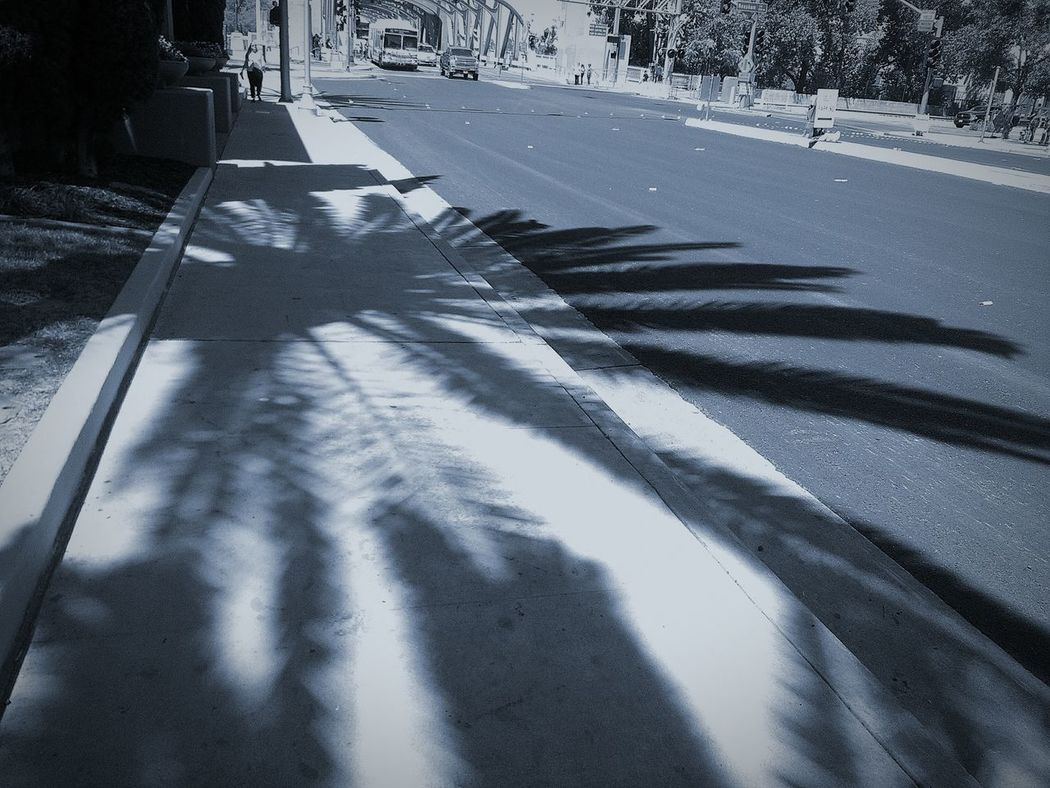 Palm Leaves Shadows Of Trees Palm Trees Shadows And Silhouettes My Photography And Edit Trees And Nature Nature Treescape Shadow Photography Eye4photography  This Week On Eyeem EyeEm Best Edits Photo Of The Day Street Photography My Photography. ❤ Taking Photos ❤ Street Photo Walking Around The City  Cars Busy Street Eyeem Black & White Black And White Photography Editing Photos Nature On Your Doorstep