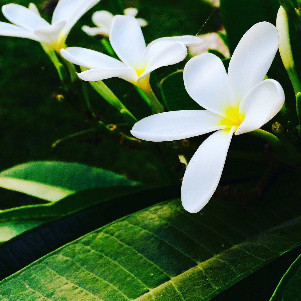 Nature Growth Beauty In Nature Freshness Flower Plant Close-up Green Color Flower Head Fragility No People Leaf Outdoors Day