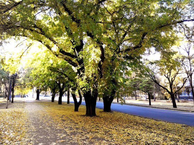 Nature Aoutmn Trees Yellow Hello World Photo Sunny Day Walk First Eyeem Photo
