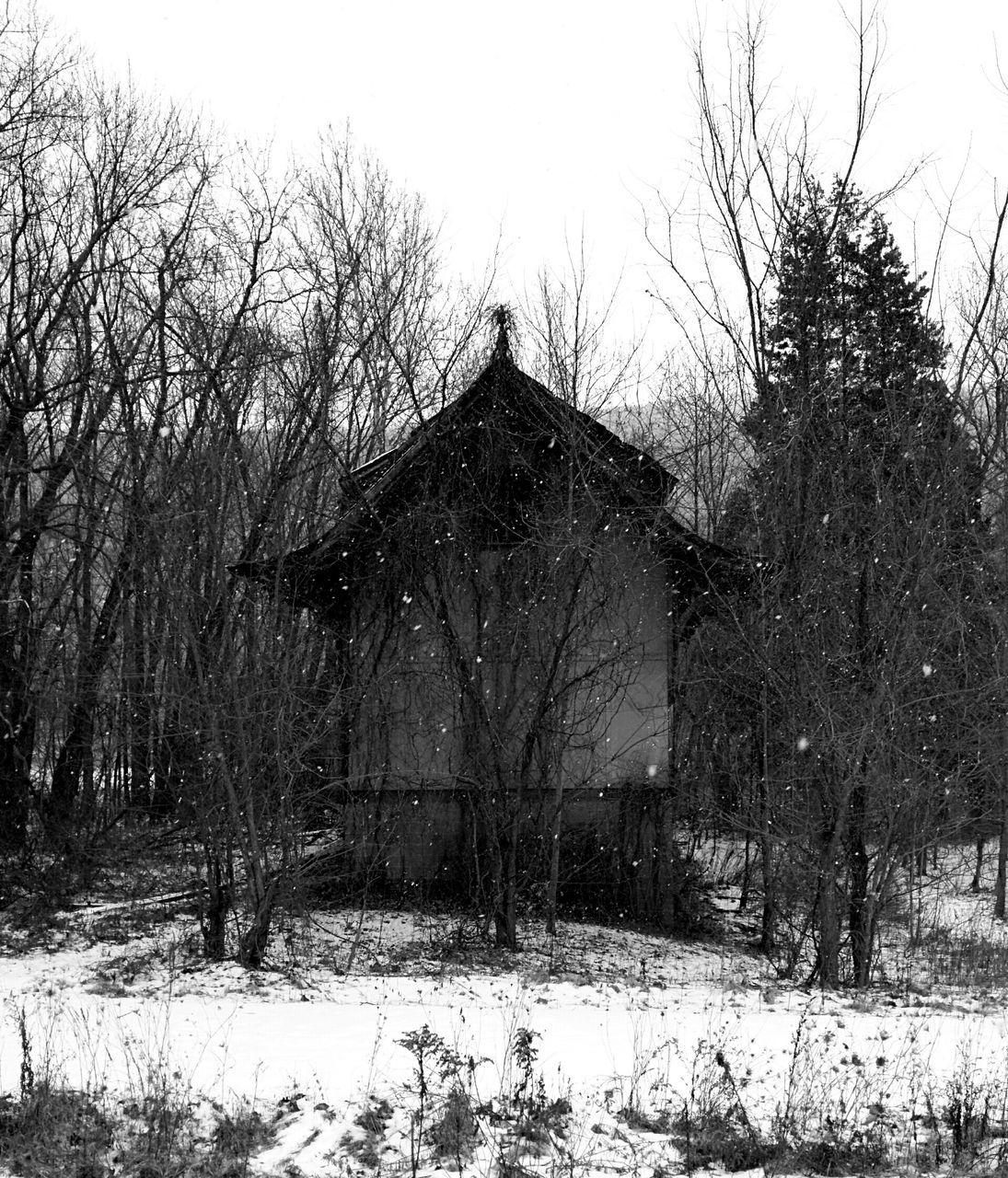 Building In Forest In Winter