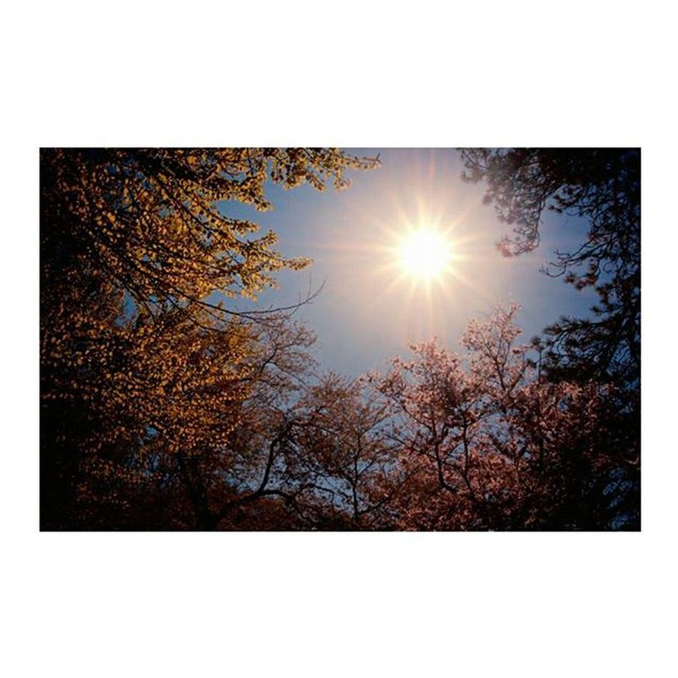 Il sole esiste per tutti 🌞 Sun Happiness Felicidad Tzn nature_loveskybeautifulcapturecolorsautumnweheartit