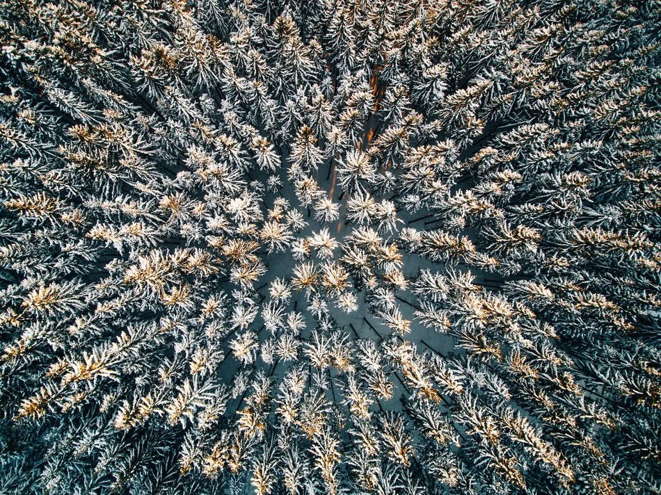 - Greetings from Czech Republic 🇨🇿 - Full Frame Backgrounds No People High Angle View Nature Outdoors Beauty In Nature Trees Snow Pine Pine Tree Pine Woodland EyeEm Nature Lover Cold Temperature Winter EyeEm Best Shots From Above  Above Drone  Czech Republic Wildlife Cold Tree Landscape Outdoor Flying High