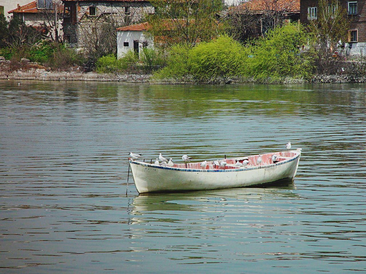 Boats Seagull Lake Nature