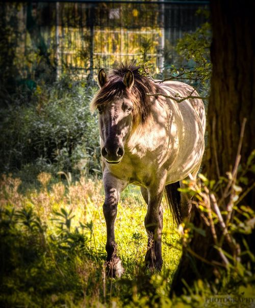 wild horse🐎 #horse #HorsePower #wild #wildlife #Nature  #AnimalLove #animal Lover #life #lifeisbeautiful #photography #photographer #Work #Hobby #love Animal Themes Animals In The Wild Mammal No People Nature Outdoors Grass Tree Day