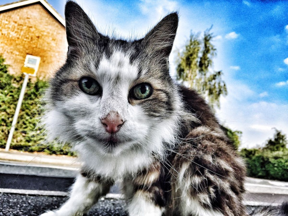 Cat I wondered across on the way to work.. Cat Pussycat Photography Photo IPhoneography Iphone6plus Apple First Eyeem Photo