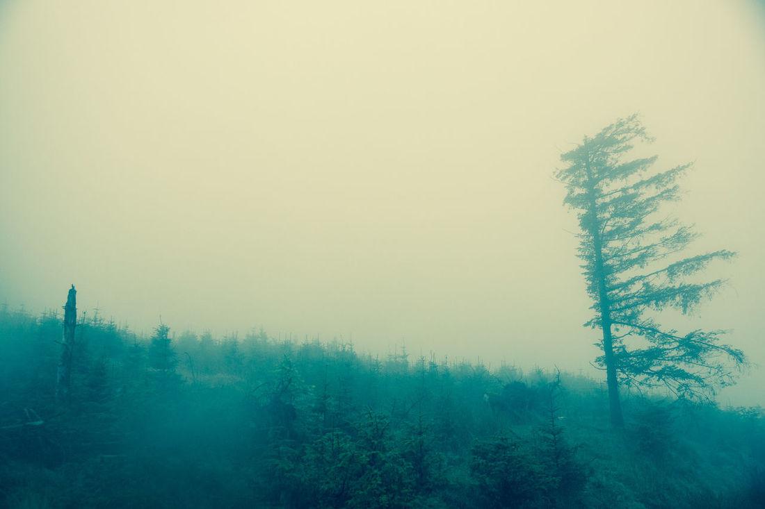 Mystery Rain Tree Tristesse Weather Wind Windward Wood