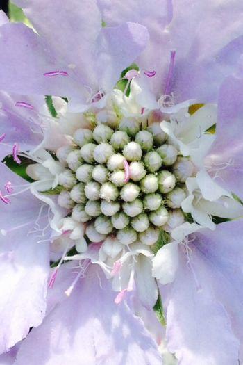 Love please listen to Prince Ea http://youtu.be/itvnQ2QB4yc Flower