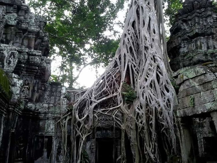 Cambodia Ta Prohm Tomb Raider  Angkor Wat Temple Tree Jungle Reclaiming Southeast Asia Lifeasiseeit John Nelson Nature