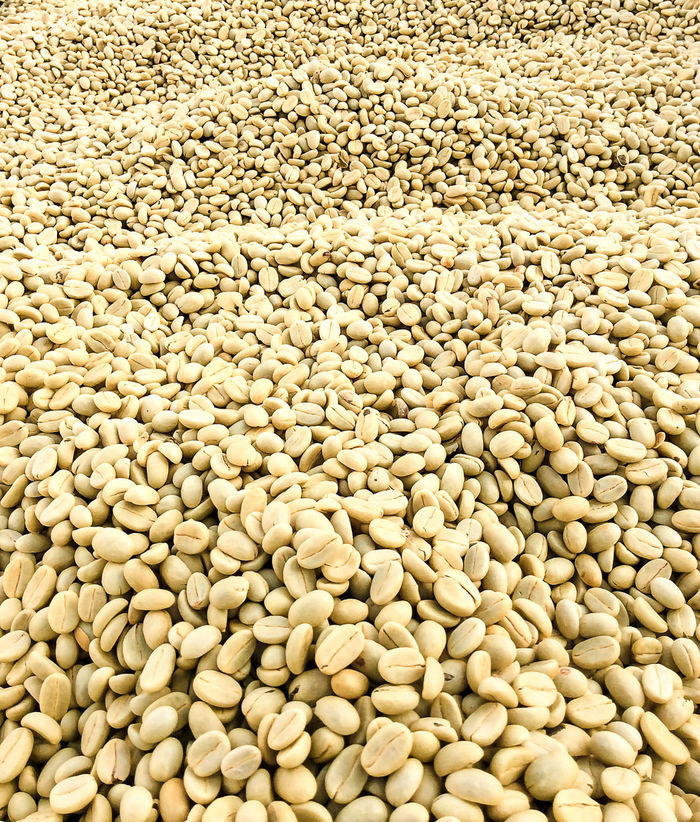 Coffee Coffee Time Abundance Close-up Coffee Beans Coffee Cherries Coffee Harvest Coffee Production Drying Coffee Farmers Yield Fieldtrip Full Frame Laos No People Parchment Specialty Grade Unroasted Coffee