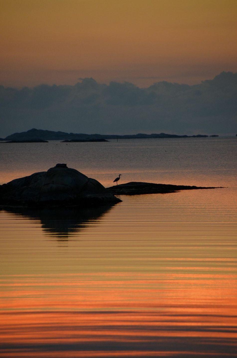 Bird in the sunset Sunset Silhouette Seaselfie Nature Seaside