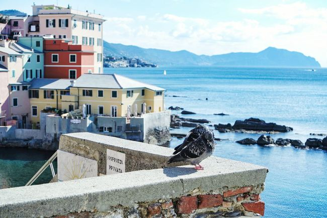 Boccadasse Sea Mountain Built Structure Water Building Exterior Sky Nautical Vessel Outdoors Cloud - Sky Mountain Range Architecture Travel Destinations City No People House Moored Scenics Day Nature Gondola - Traditional Boat Fresh 3 Eye4photography  EyeEm Best Shots Open Edit Architecture
