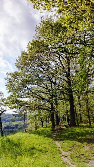 Himmel Und Wolken EyeEm Nature Lover Landschaft Landscape Schöne Aussicht! Kleiner Pfad Waldweg Frisches Grün Wood Schöner Ausblick Schöner Tag  Beautiful Stille Relaxing Moments Relaxing Time Bank
