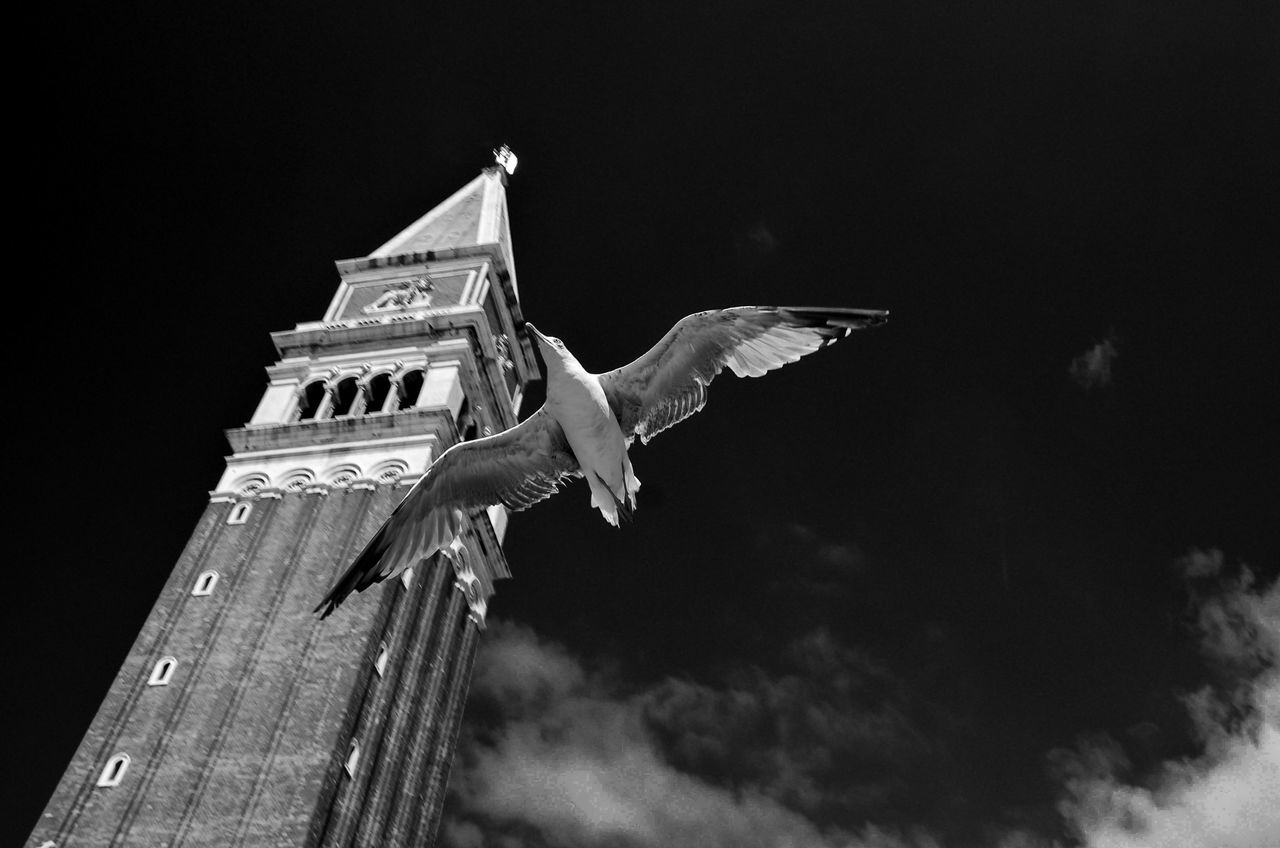gull, tower, sky Architecture Blackandwhite Campanile Di San Marco EyeEm Best Shots Famous Place Fortheloveofblackandwhite Gull Gulls In Flight Holiday Italia Low Angle View Lucky Shot Monochrome Monument No People Outdoors Seeing The Sights Shootermag Showcase July Sky Tall - High Capturing Motion Birds Venezia Bnw_friday_eyeemchallenge