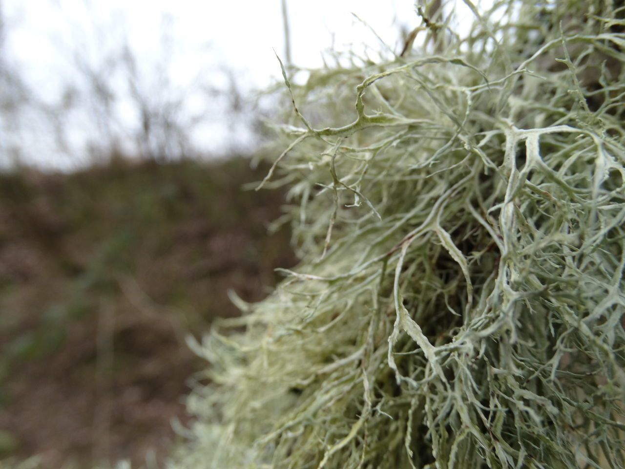 Close-up Growth Lichen Macro Photography Moss Nature No People Outdoors
