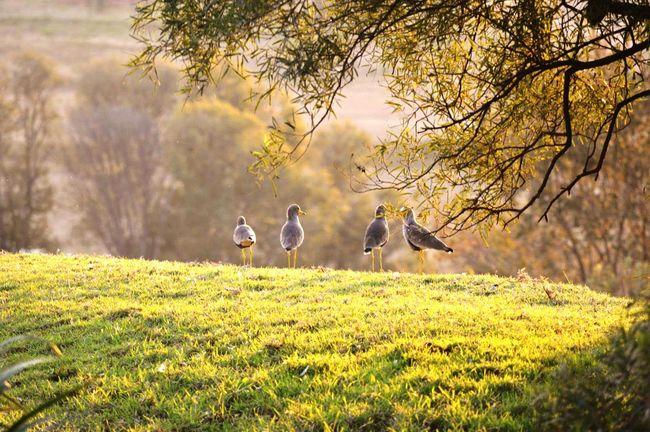 Four gossip birds.... LoveNature Birds Tall Legs Gossiping Gossip Birds Outdoors Nature Hills Sunset Beautiful Sunset Africa Cradle Valley South Africa