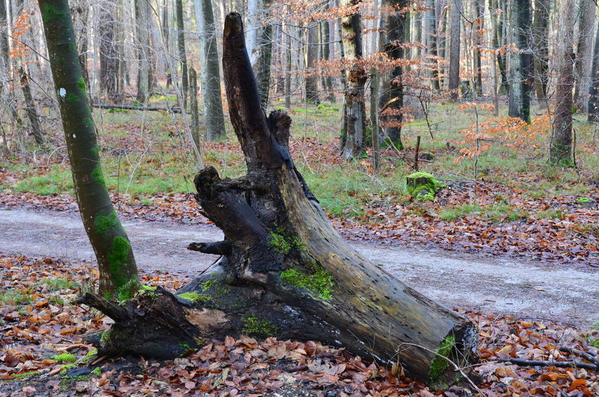 Best Eyem Photo Nikon Tree Trunk Beauty In Nature Day first eyeem photo Forest Growth Landscape Nature No People Outdoors Scenics Siebentischwald Tranquil Scene Tranquility Tree Tree Trunk