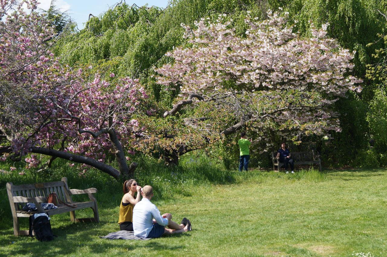 Relaxing Royal Botanic Gardens Kew Gardens Flowers 🌸🌸🌸 London Springtime
