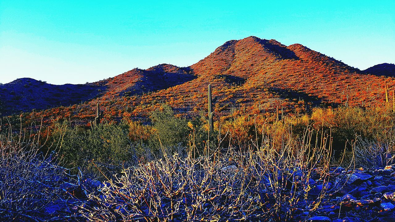 Desert Things Sky Sunset Nature Outdoors Check This Out Saguaro Desert Scenics Beauty In Nature Landscape Samsungphotography Klique Klique Arid Climate Nature No People Maximum Edit Cactus Abstracts Sick Edit EyeEm Gallery