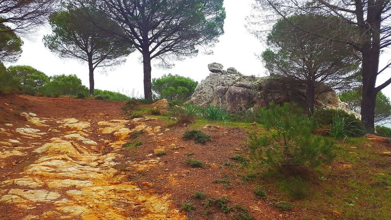 Nature SPAIN Hiking Adventures Looking For Adventures Love Hiking Jimena De La Frontera Trees Hiking View Hikinglife Forrest Mountain Hiking Trail Hiking❤ Alcornocales