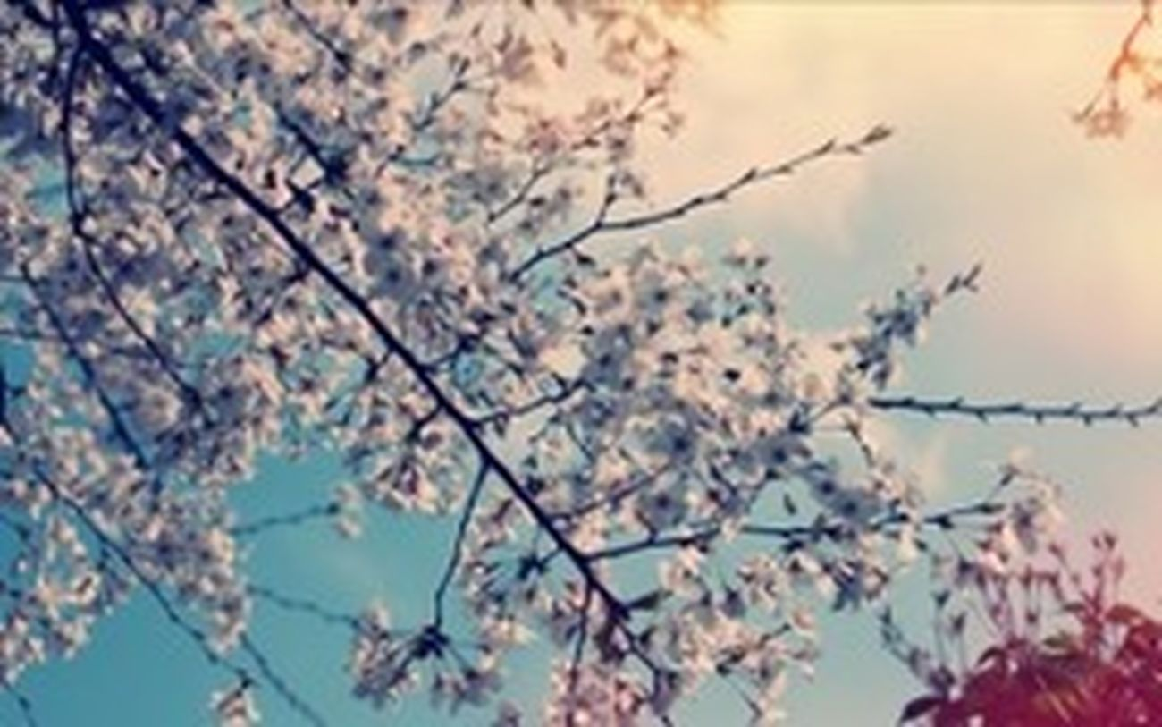 Flowers #цветы #photo #фото большие города