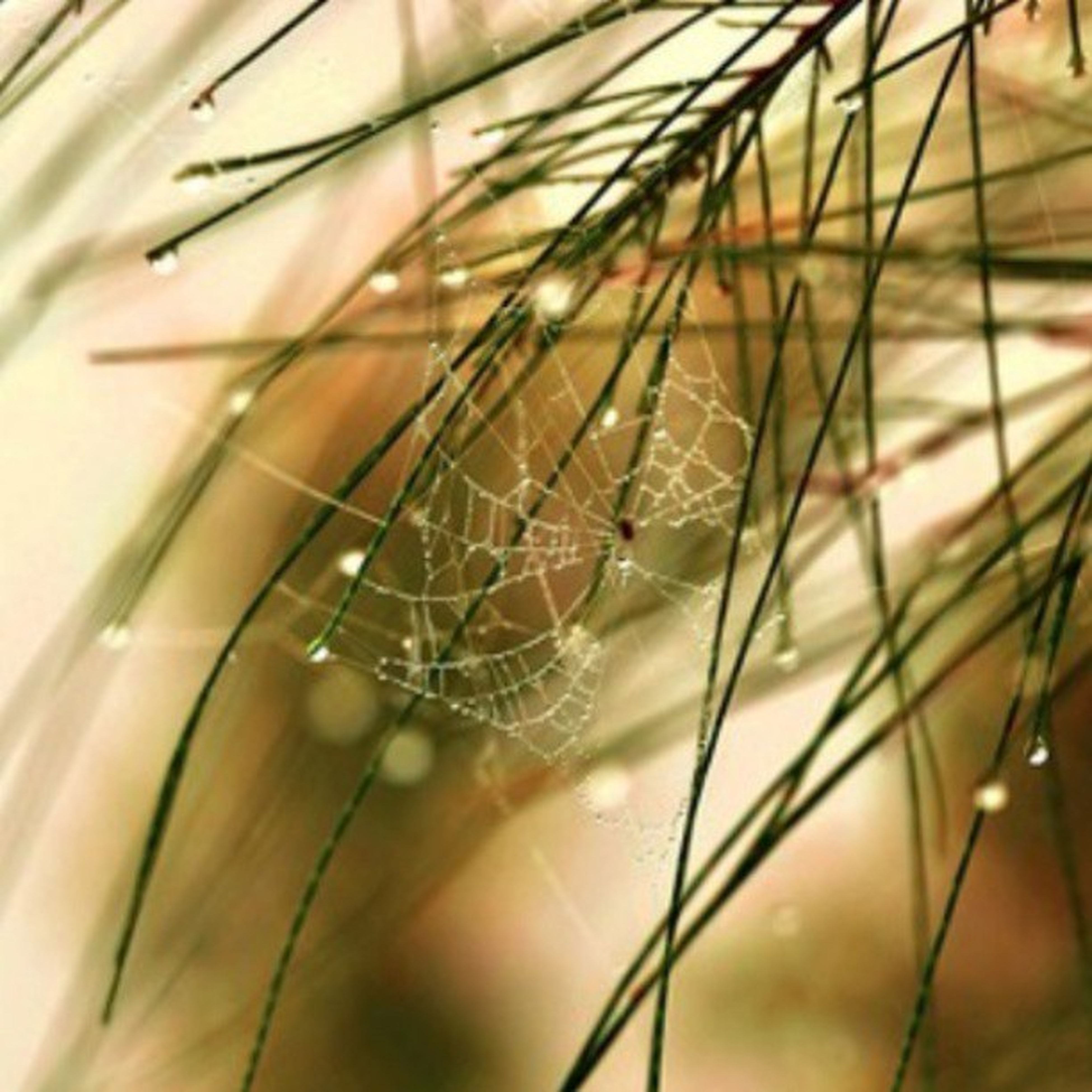 close-up, drop, plant, focus on foreground, growth, nature, water, fragility, spider web, wet, selective focus, dew, grass, stem, blade of grass, beauty in nature, freshness, leaf, day, outdoors