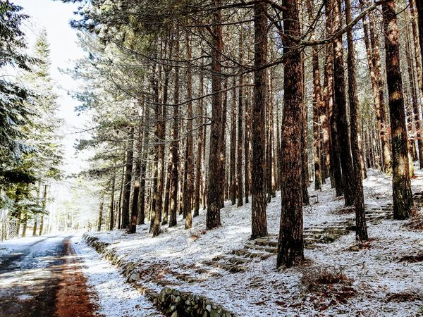 Road through pine forest in winter Beauty In Nature Cold Temperature Day Forest Growth Landscape Nature No People Outdoors Road Scenics Sky Snow The Way Forward Tranquil Scene Tranquility Tree Tree Trunk Weather Winter Shades Of Winter