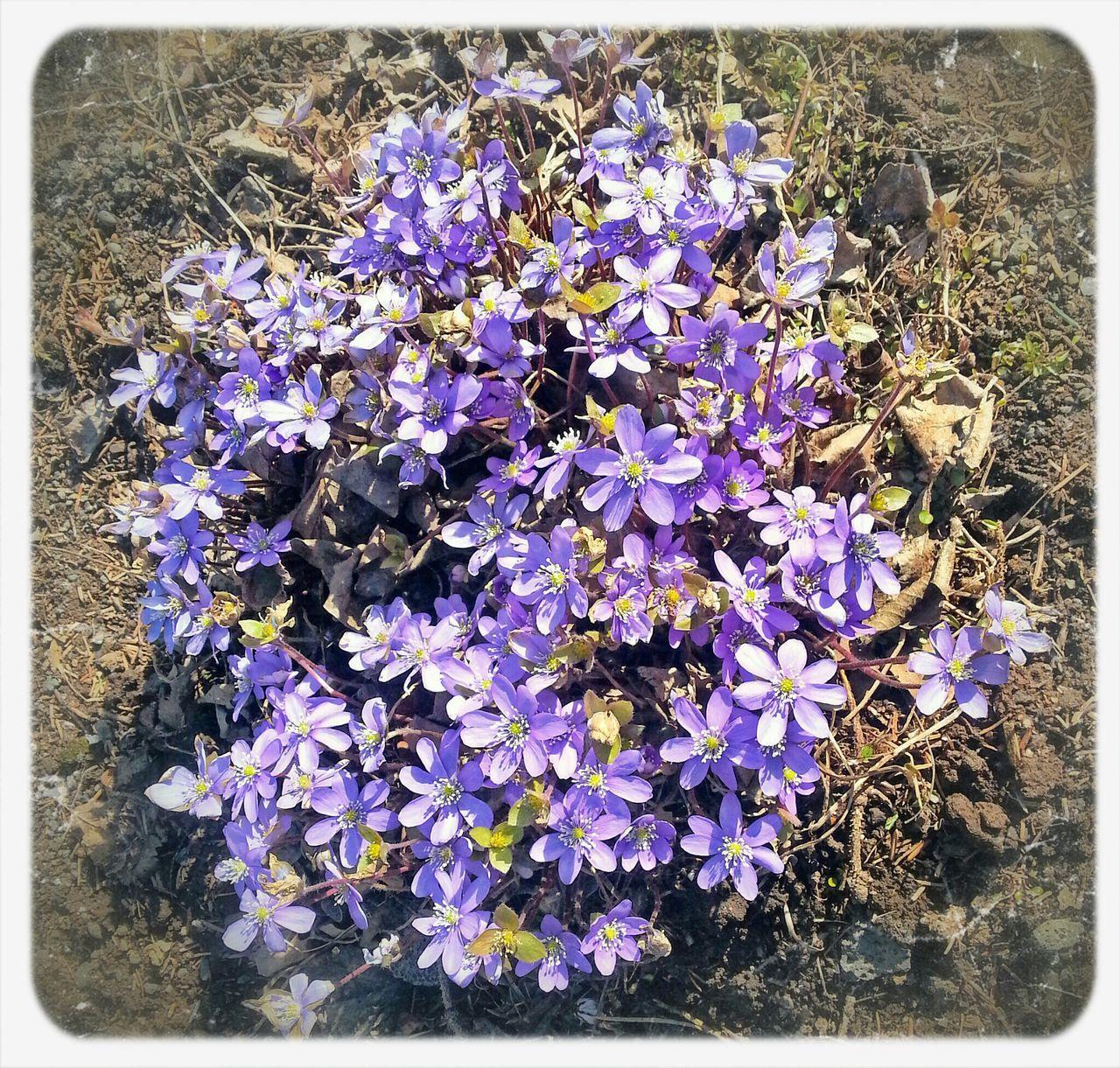 Flowers Spring Iceland Botanical Gardens
