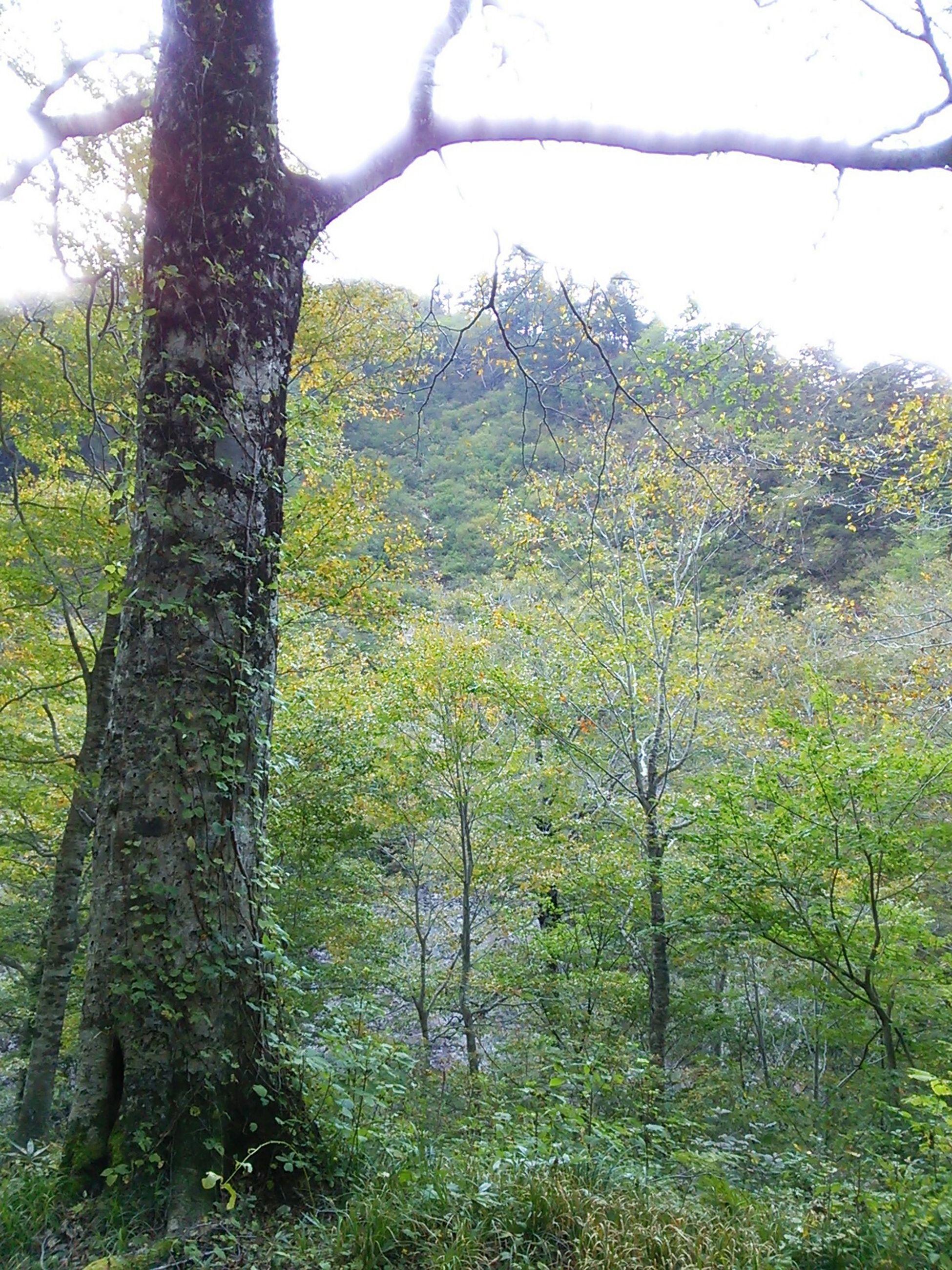 Green Relaxing Forest