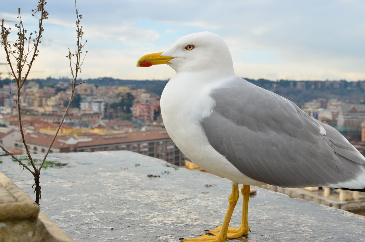 The watch Bird Cityscape Close-up Focus On Foreground Nature No People One Animal Outdoors Seagull