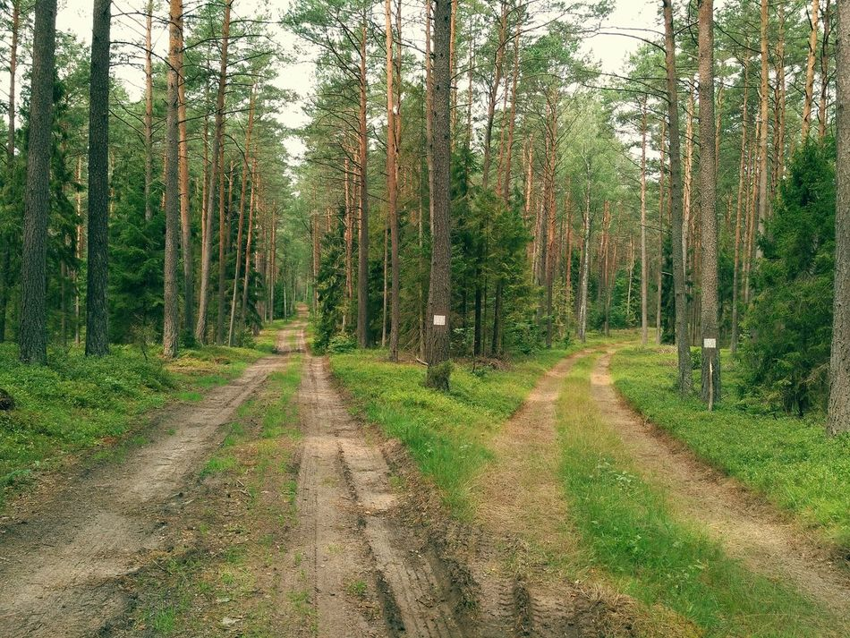 Lost in woods, find the right way to home. Crossroads nature landscape photo taken in Masurian Puszcza Piska Forest in Poland, Europe. Puszcza Piska Tree Crossroads Crossroad Lost Lost My Way Nature Trees Poland Paths Diverge Woods No People Outdoors Way Way To Go Home