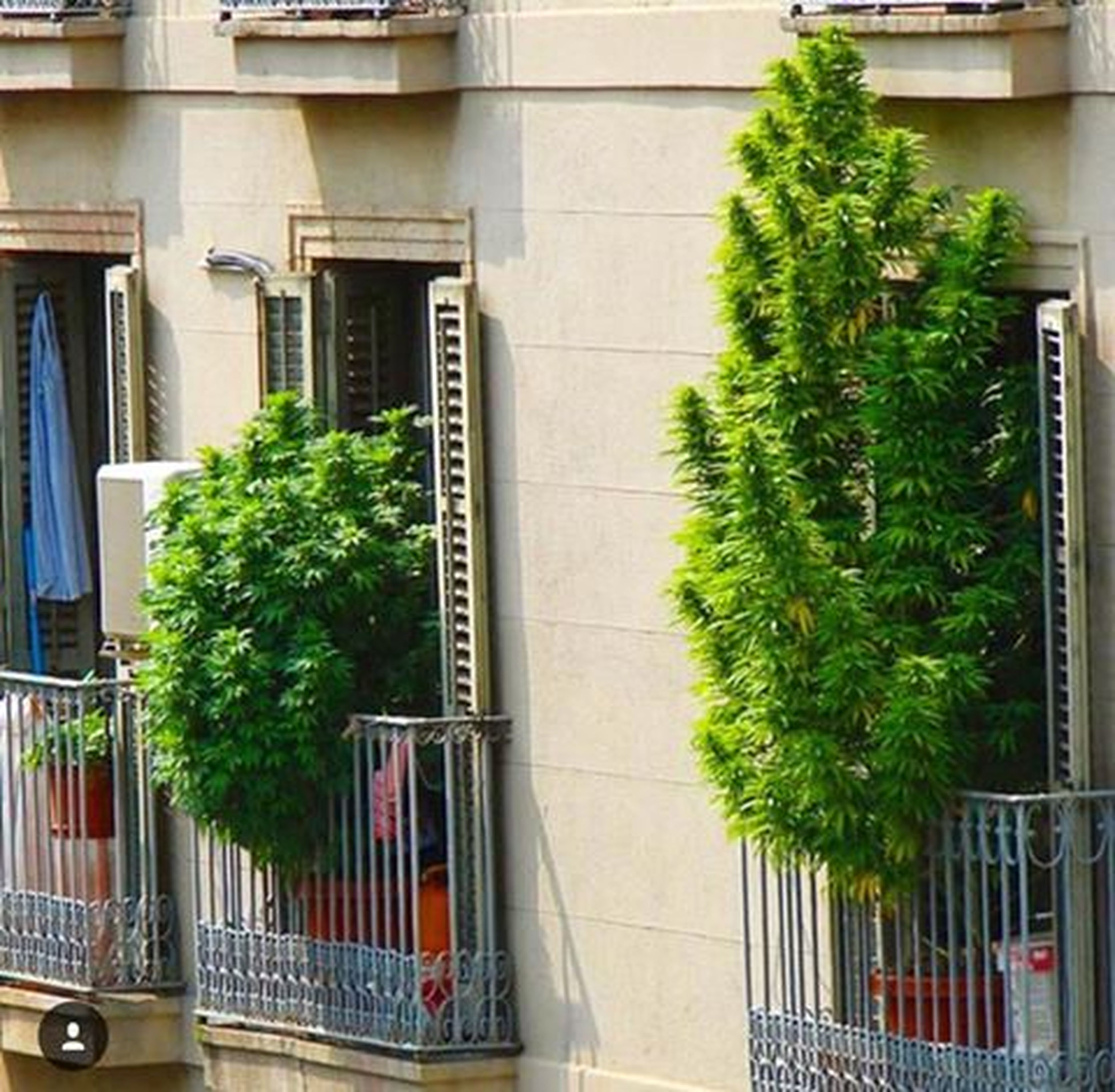architecture, built structure, building exterior, potted plant, growth, plant, tree, window, balcony, day, green color, outdoors, growing