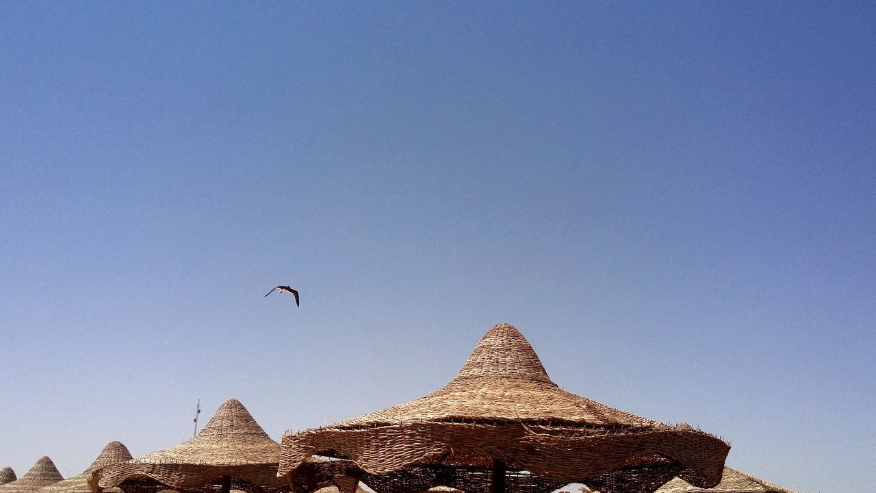Low Angle View Of Bird Flying Over Parasols Against Clear Blue Sky