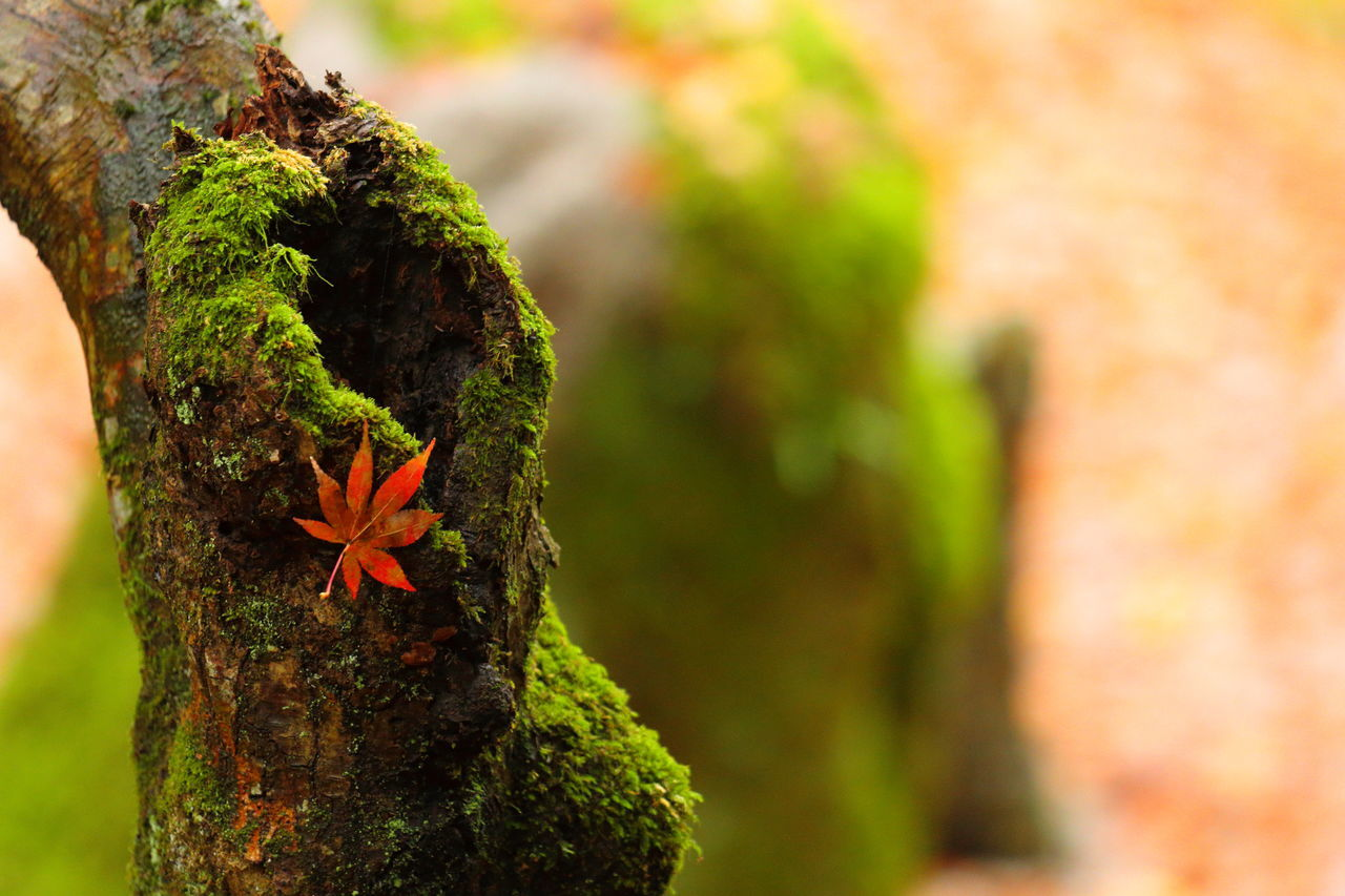 focus on foreground, growth, nature, day, close-up, tree trunk, outdoors, no people, flower, beauty in nature, fragility, animal themes, tree