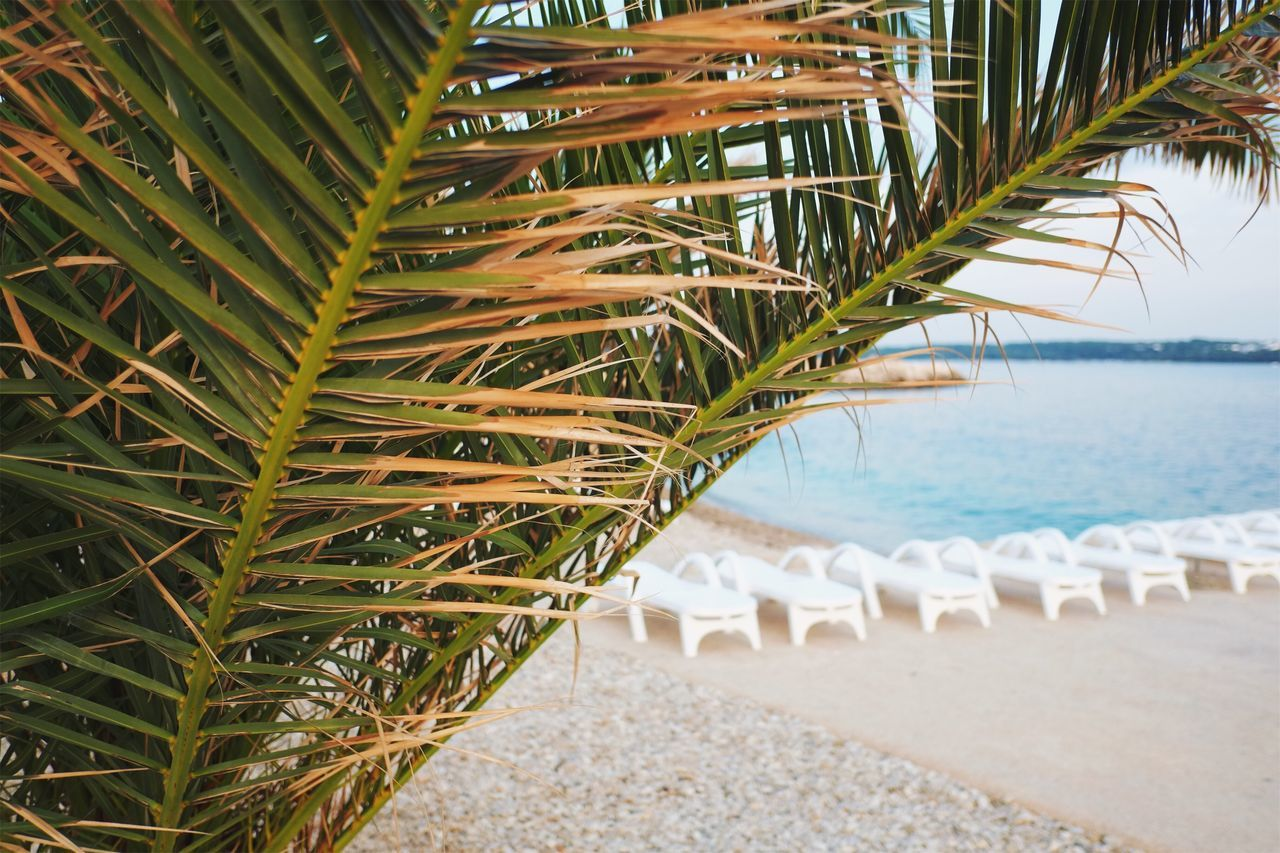 Relaxing at the beach. Beach Sea Nature Palm Tree Beauty In Nature Tranquility Outdoors Water Scenics No People Sand Day Close-up