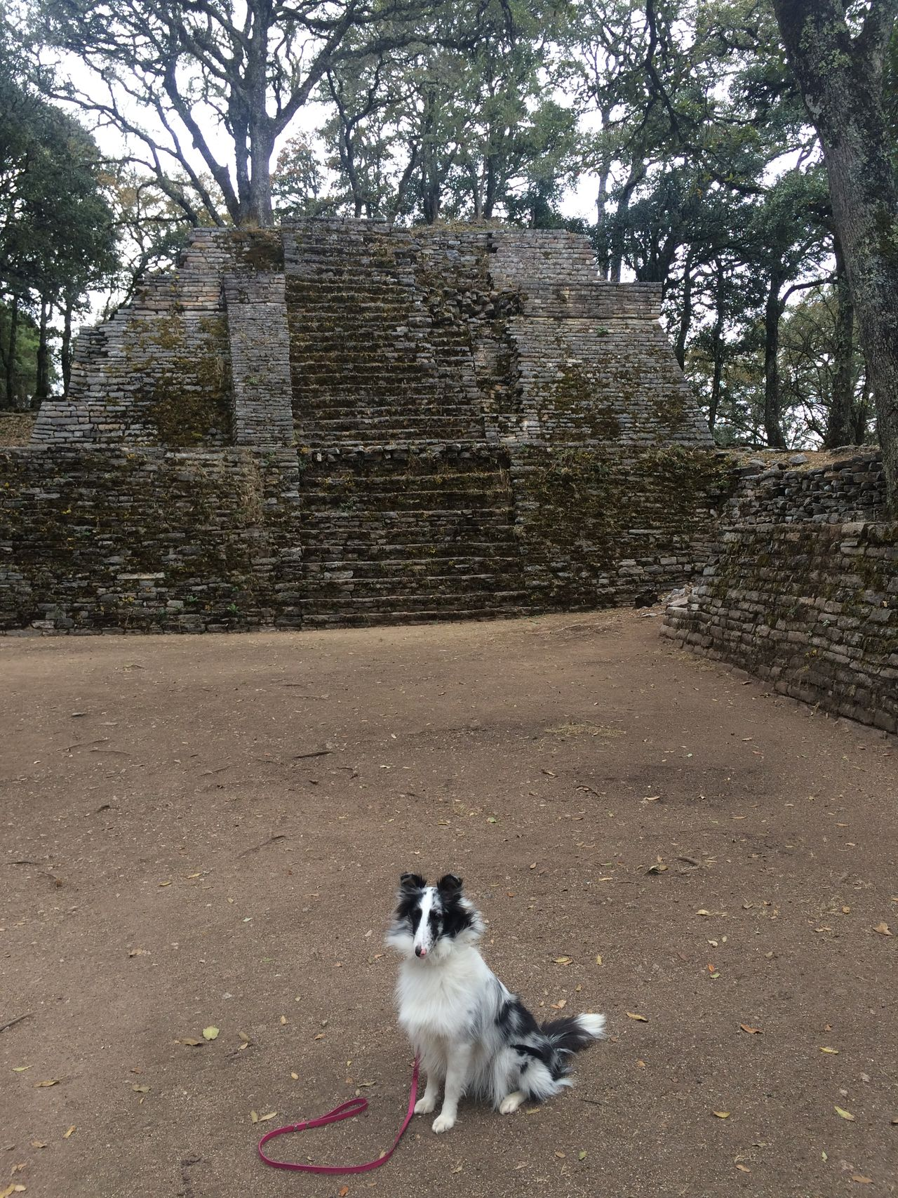 Dog Nature No People Outdoors Pets Resting Sierra Gorda, Queretaro The Way Forward Toluquilla Tourist Tree