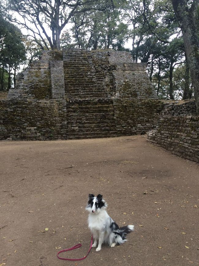 Dog Nature No People Outdoors Pets Resting Sierra Gorda, Queretaro The Way Forward Toluquilla Tourist Tree