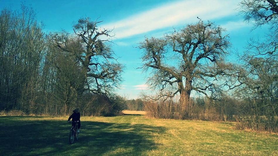 Tree Nature Growth Sky Leisure Activity Men One Person Outdoors Real People Beauty In Nature Day People Bikes Bike Beautiful Nature Beauty In Nature Bikers Bike Ride Biketour Biketrip Bike Riding Nature Relax Hobby Hobbyphotography