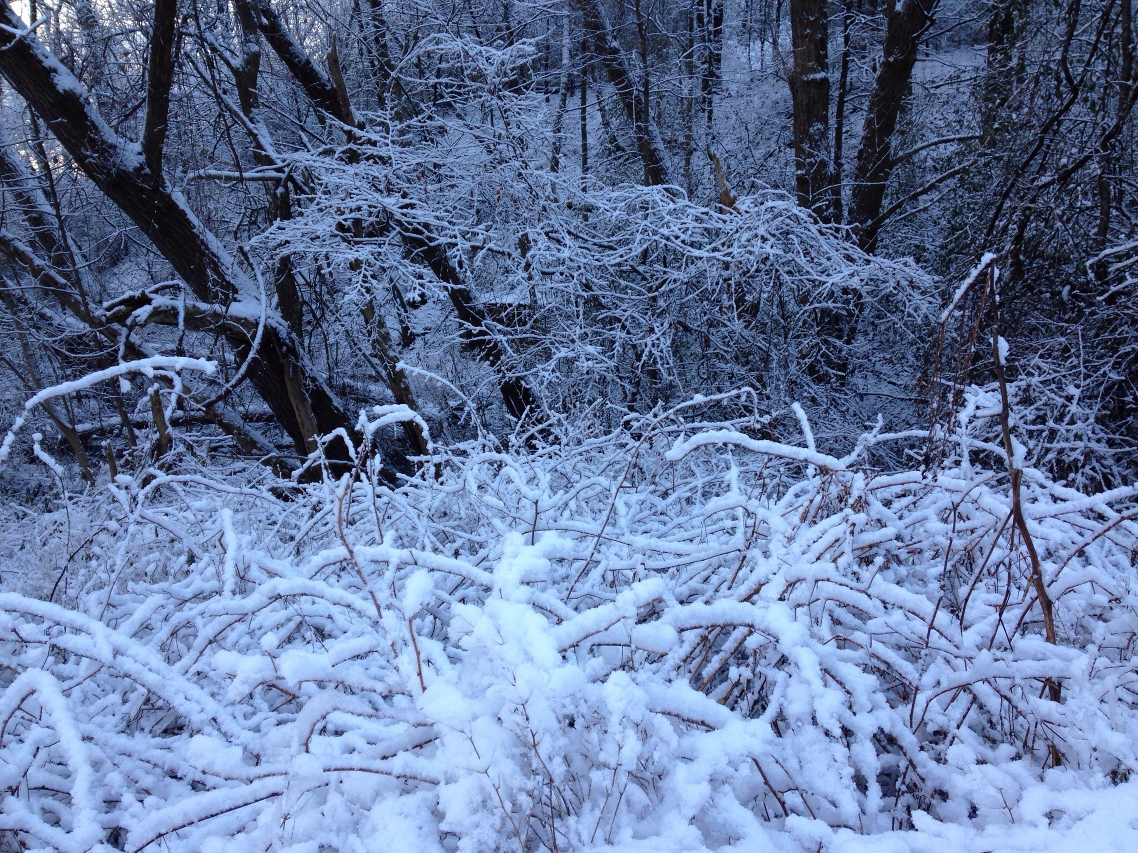 snow, winter, cold temperature, season, weather, bare tree, tree, tranquility, covering, tranquil scene, frozen, nature, beauty in nature, forest, scenics, branch, landscape, non-urban scene, covered, field