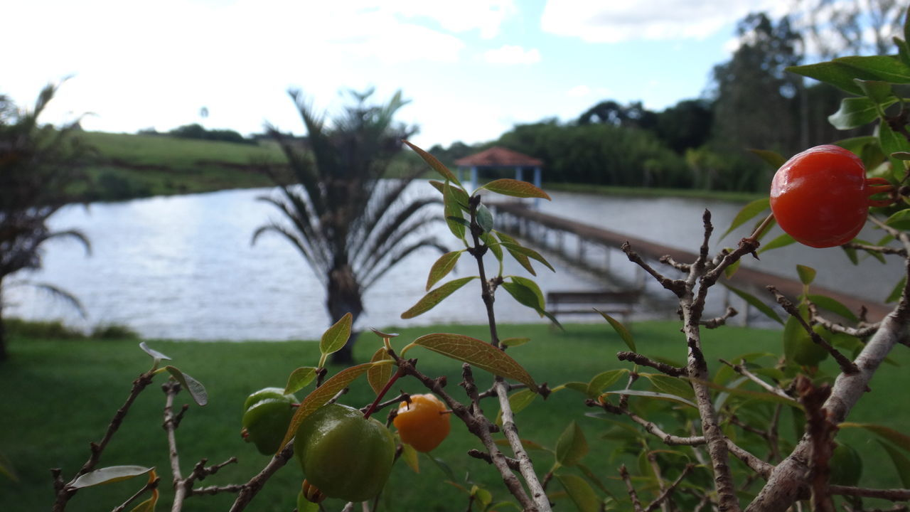 fruit, tree, food and drink, growth, focus on foreground, apple - fruit, healthy eating, freshness, food, nature, outdoors, no people, day, apple, green color, leaf, beauty in nature, sky, branch, lake, close-up, hanging, red, water