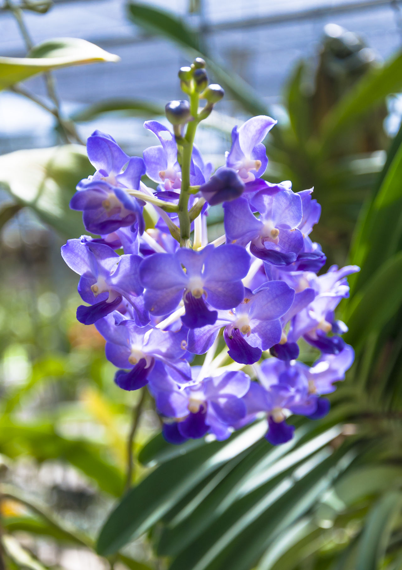 Purple orchid Beauty In Nature Close-up Day Flower Flower Head Flowers Flowers, Nature And Beauty Flowers,Plants & Garden Fragility Freshness Growth Nature No People Orchid Orchid Blossoms Outdoors Petal Plant Purple