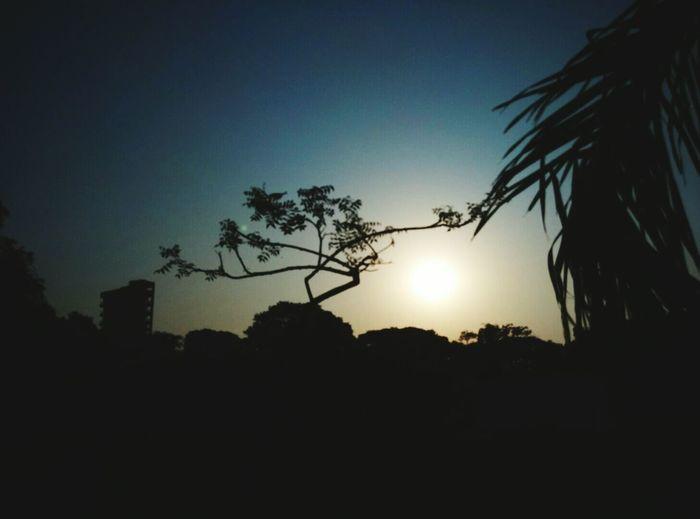 Silhouette Hugging A Tree Mumbai