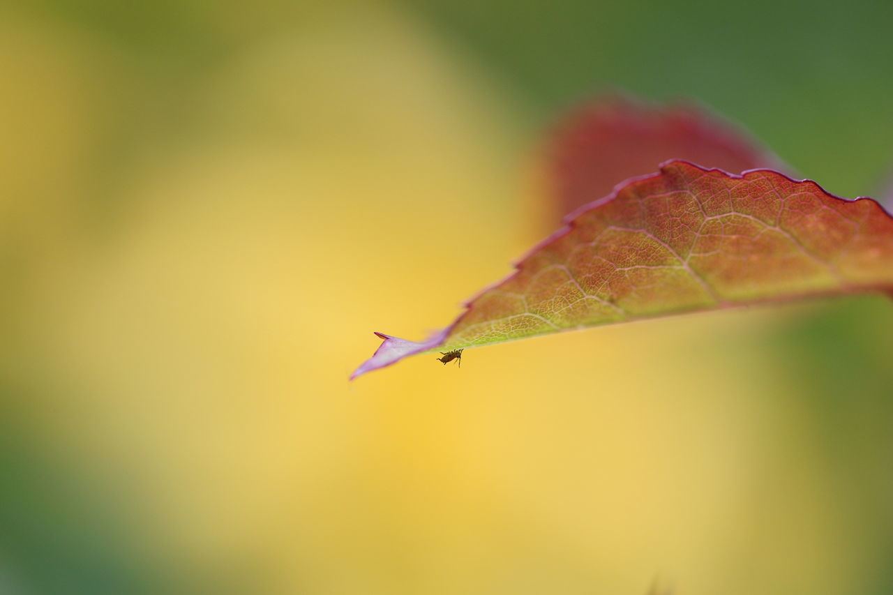 leaf, one animal, close-up, nature, animals in the wild, animal themes, no people, insect, outdoors, day, focus on foreground, beauty in nature, fragility