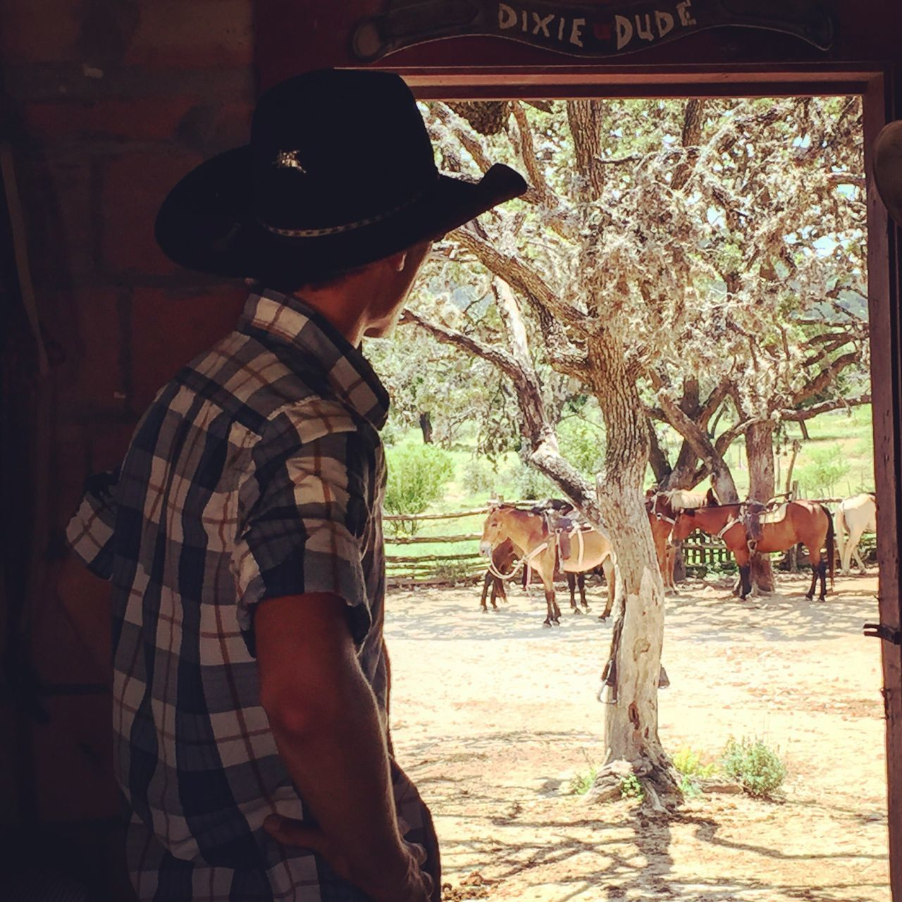 horse, domestic animals, mammal, livestock, hat, real people, tree, cowboy, one person, lifestyles, casual clothing, one animal, day, leisure activity, cowboy hat, standing, outdoors, young women, nature, men, young adult, pets, people