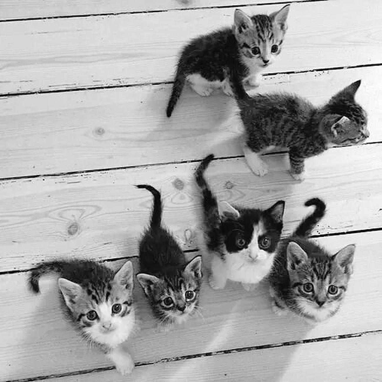 MyBABiES Mycats Benimkedim Benimkedimhisseder Benimgözümden Istanbul Turkey Siziseviyorum 💙💙💙💙💙💙💙💙💙💙💙