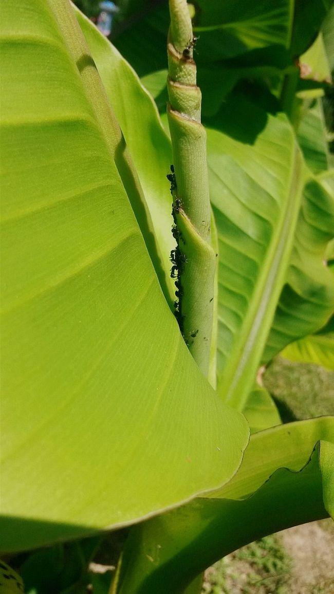 Beautiful Nature Ants Animal Insect Enjoying Life
