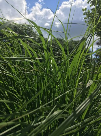 Growth Green Color Cloud - Sky Grass Field Day Plant Sky Close-up Nature No People Outdoors Beauty In Nature Freshness