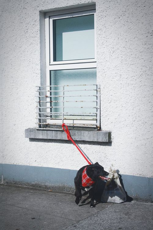 Negative Space Dog Life Red Punk Style Streets Bicolor Windowreflection Cork City